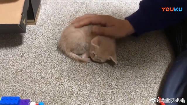 主人不管多少次把睡着的小奶猫放到地毯上……