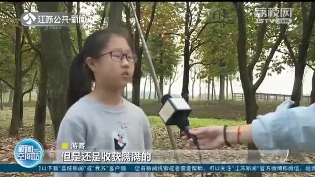 金秋丰收季 宿迁:千亩柿园硕果累累 丰收采摘正当时
