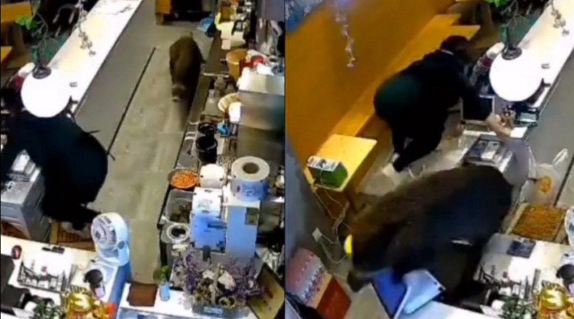 一野猪闯入奶茶店身手敏捷表演跨栏 吓坏店内女店员