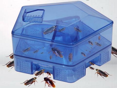 香港夫妇心太软,诱到满满四盒蟑螂,选择野外放生,网友气疯