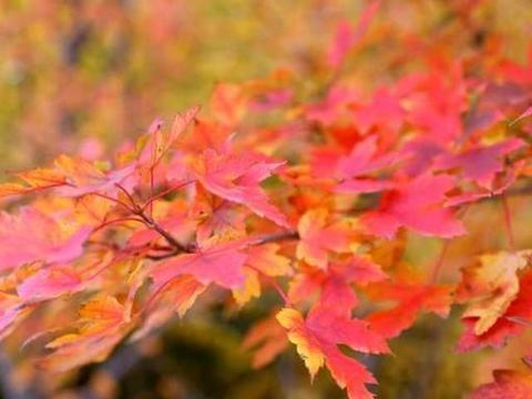 北方的秋,多思的秋