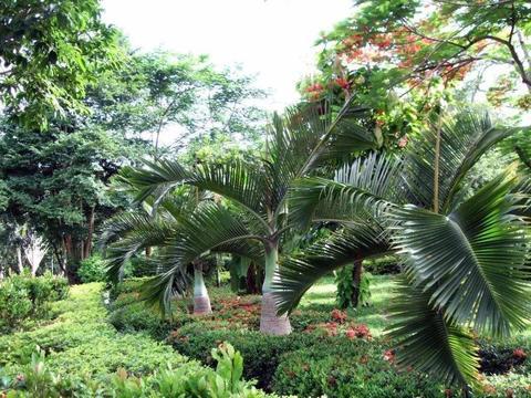 海南最早对外开放参观的热带植物园,种类丰富,堪比百科全书