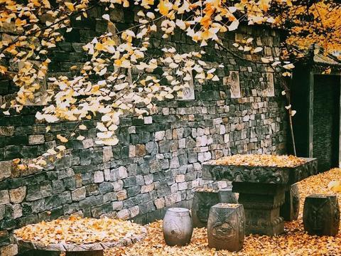 11月必去:这8个最佳银杏观赏地,藏着中国最美的深秋!