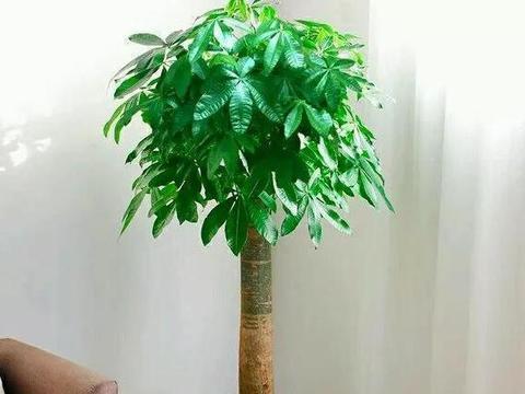 给盆栽套个塑料袋,到了寒冬,花草依旧长得又快又好
