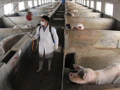 你的养猪场为什么呼吸道疾病多发?只因这一个字,尤其是秋冬季节