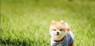 有人说狗看不起人,我把狗当爱恨交加
