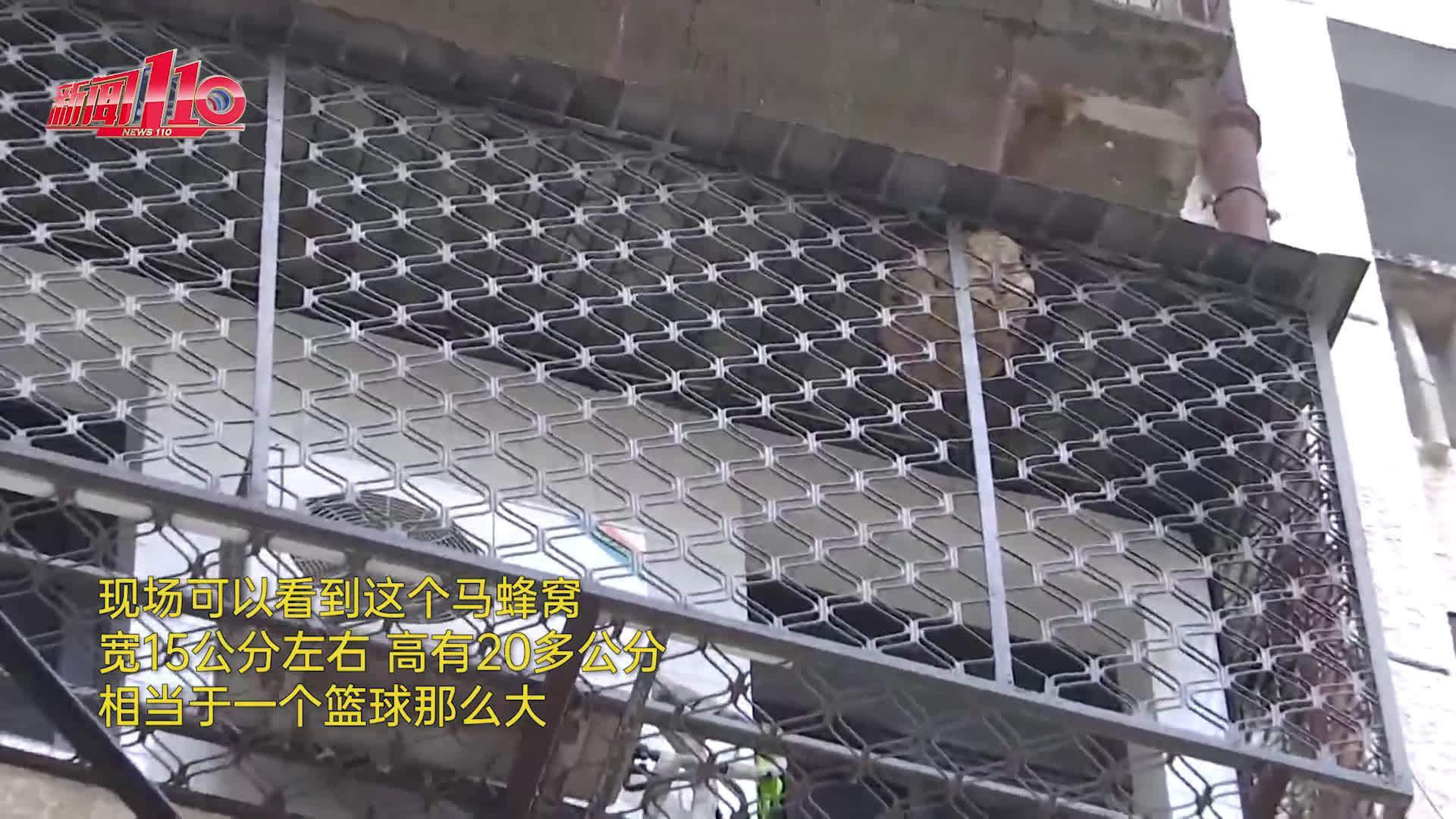 """竟有一个篮球大!福州 居民家中防盗网""""长出""""巨型马蜂窝"""