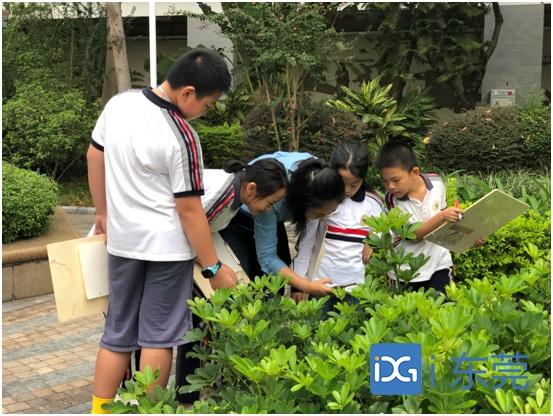 """让植物""""活起来""""!东莞报业小记者走进南城阳光小学自然径"""