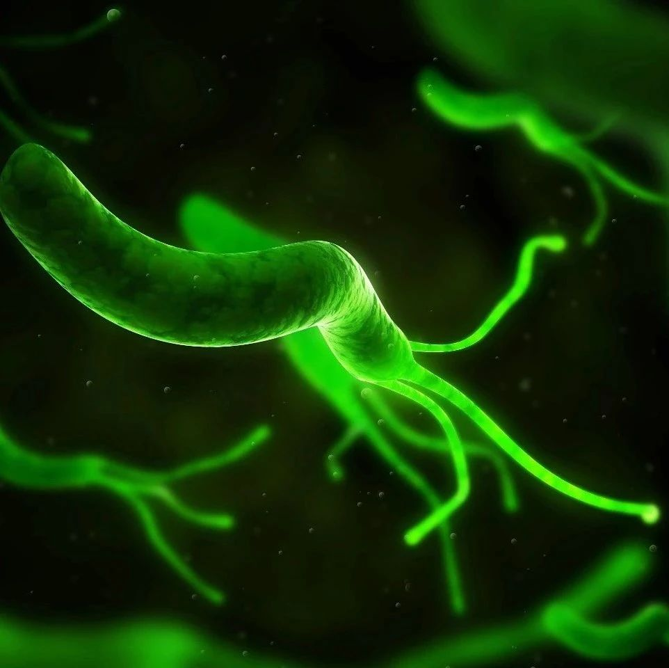 关于幽门螺杆菌(Hp),这是一篇最全最好的科普!