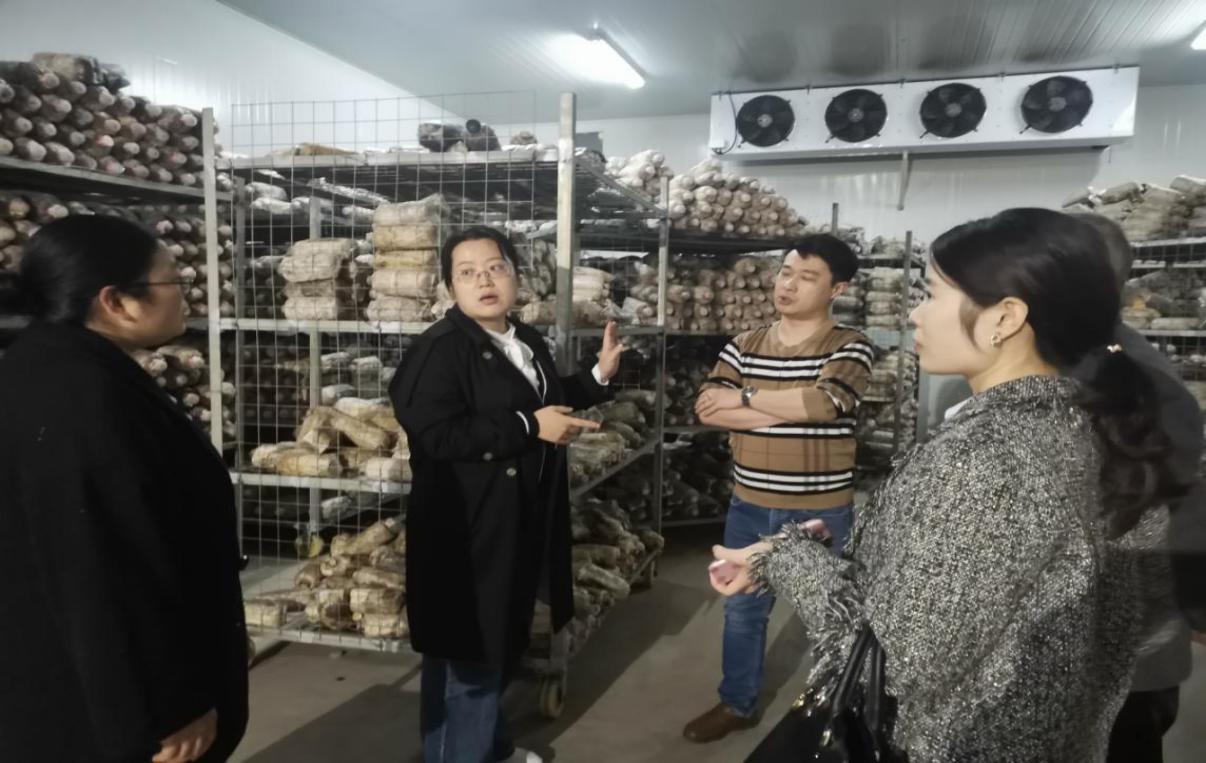 """省绿色食品发展中心到长宁县指导""""竹海长裙竹荪""""品牌创建"""