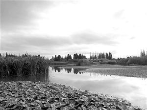 宝丰半岛湿地一期力争明年1月底完工