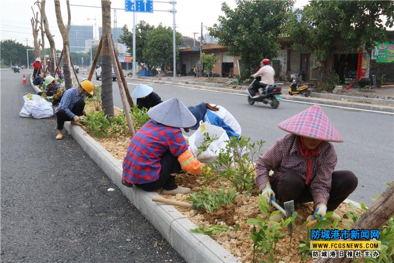 工人们在公路绿化带种植各种花草