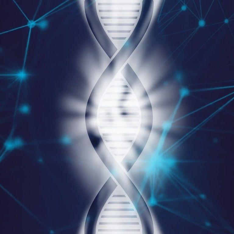 Cell重磅   贺建奎进行的胚胎编辑试验可导致染色体丢失,易位等副作用