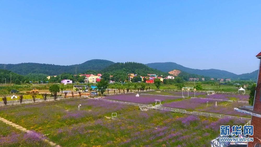 武汉蔡甸:花草香 乡村美