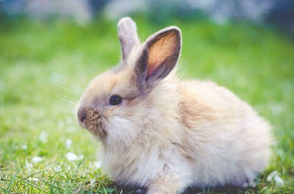 10月31日一到,生肖兔家里有人员调动,卯兔人一定要沉住气!