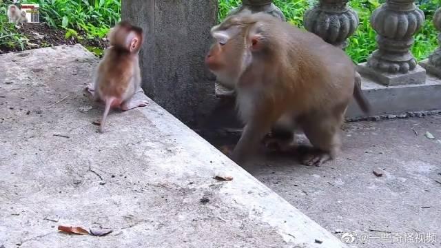 教小猴子跳跃,猴麻麻鼓励小猴子的表情太温柔了吧