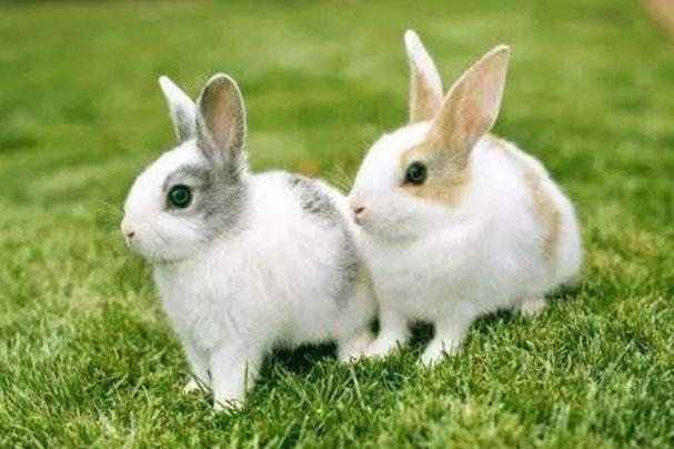 属兔人:11月1日不宜出门办事,你知道11月1日是什么日子吗?