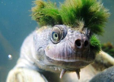 男子钓鱼时抓到只乌龟,结果放进浴缸发现有颗草,上网一查惊到了