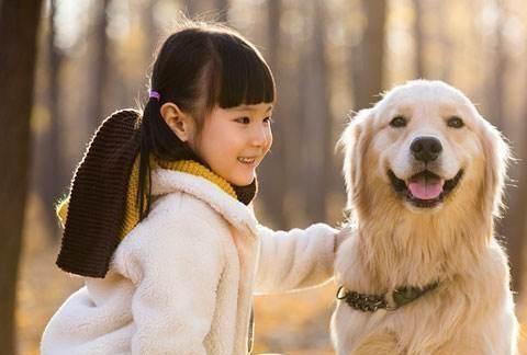 想要一只更放松的狗吗?教狗这五项技能,宠物主人就不会觉得累了