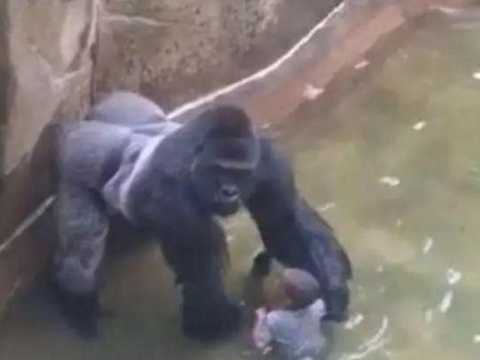 母亲带儿子去动物园,孩子不慎掉进水池里,猩猩的行为让人感动