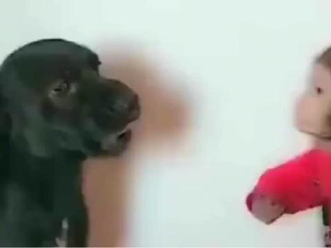 小猴子一直欺负小奶狗,狗狗都快气炸了,还是一点招都没有
