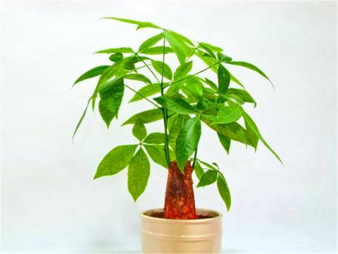 6种盆栽不开花,叶片却比花还美,摆在家里,优雅大气有格调