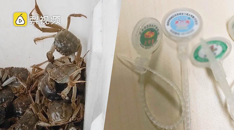 外地蟹运阳澄湖洗澡后涨价三倍,防伪蟹扣标一元起售