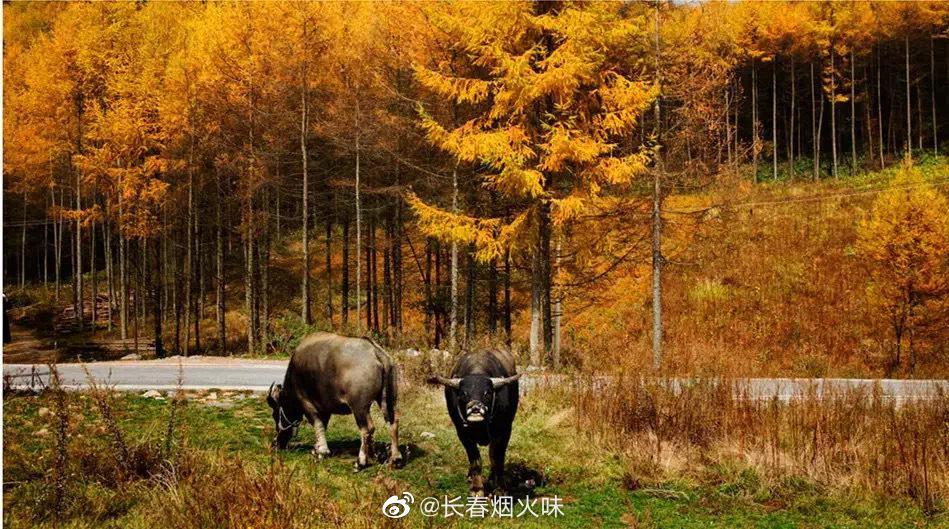 巫山梨子坪国家森林公园 最佳观赏期:10月下旬-11月初