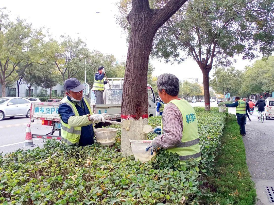 园林处:2020年度树木刷白工作陆续展开