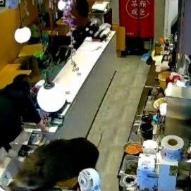 200斤野猪冲进奶茶店!女店员瞬间→