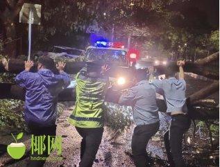 树木倒地路难行 三亚路管员及时清障保畅通