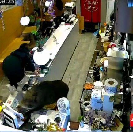猝不及防!200斤大野猪冲进奶茶店……