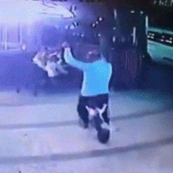 遛狗时遇到流浪猫攻击,铲屎官为救爱犬裤子被扒掉...