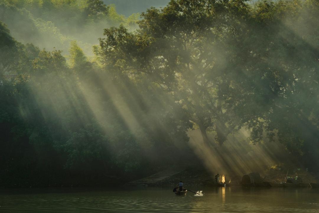 浙江12种重点珍稀濒危野生动物,你见过几种?图片