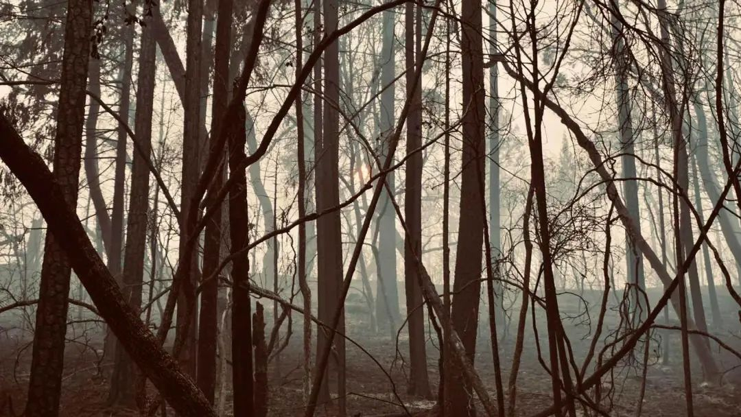 史无前例!山火烧毁的加州土地,已接近北京市的面积图片