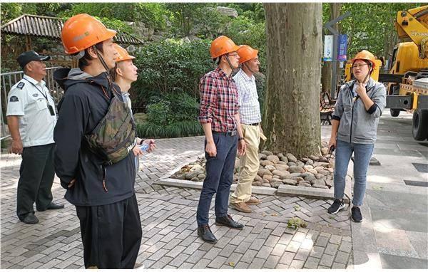 市古树办赴静安公园指导悬铃木古树群综合保护工作