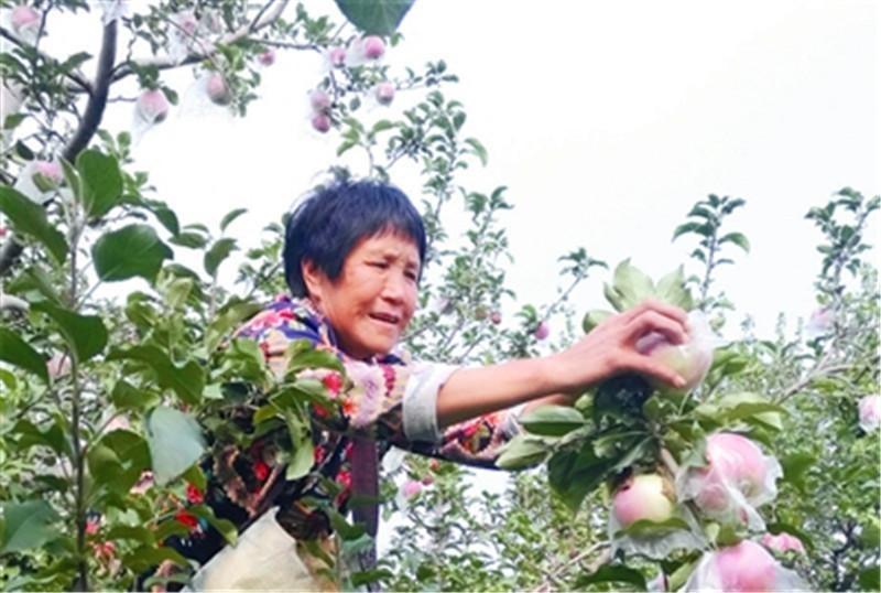 邢台市信都区皇寺镇发展果树种植