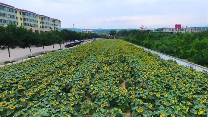 汾阳市李家庄村:党和人民一起编织了一个美丽的