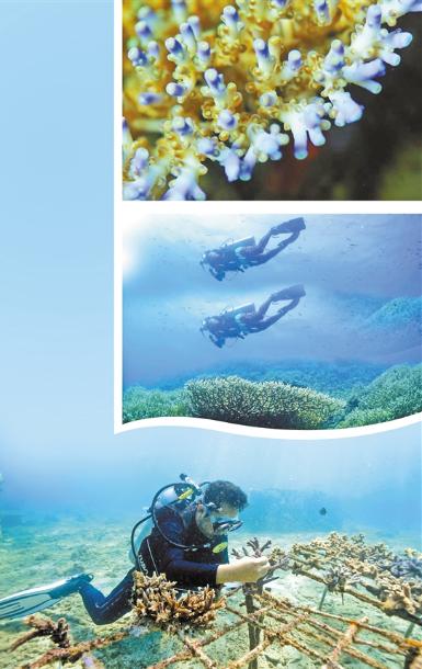 罗杰—— 珊瑚星球创始人 我在昆明养珊