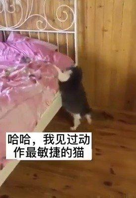 不是我说哈,这下床动作真他猫丢人哈哈哈哈哈哈哈哈哈哈