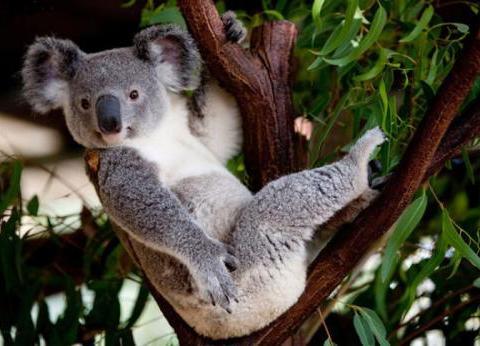 那些高考成绩不理想到澳洲留学读的什么大学?名牌还是野鸡大学?
