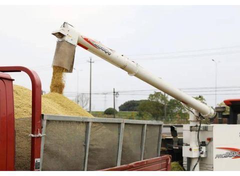 中晚籼稻价格上涨,大家收益如何?有人忧有人喜,增收关键在选种