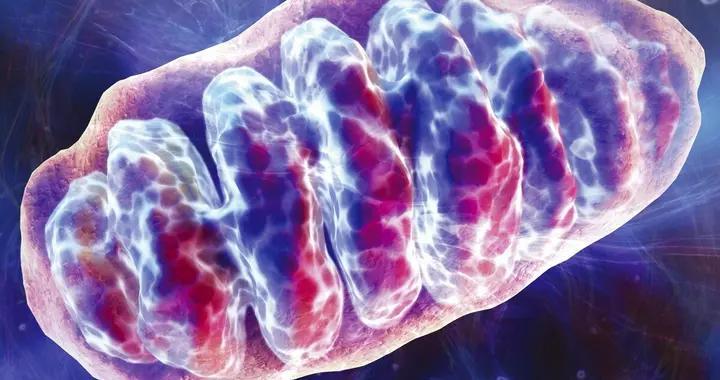 他汀类药物影响线粒体,可能引起肌肉酸痛,升高血糖,5点可改善