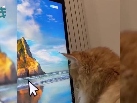 肥橘猫被巨大鼠标玩弄 一通摇头晃脑后意味深长地看向了主人
