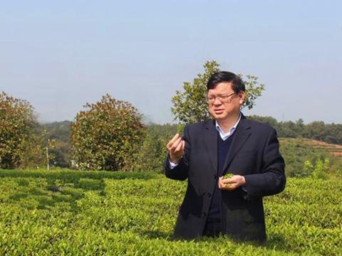 周重旺:实干巧干,造就了湖南茶界的航母级企业