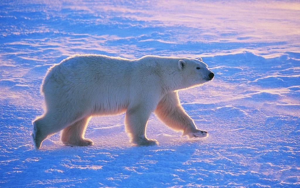 我是一名神奇宝贝训练师,这是我收服北极熊兽的经历