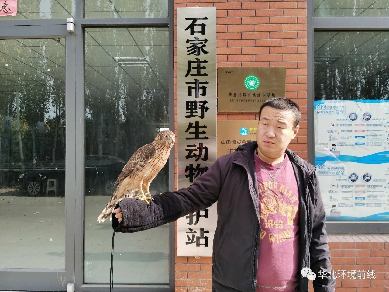 石家庄市野生动物救护站救助受伤苍鹰短耳鸮