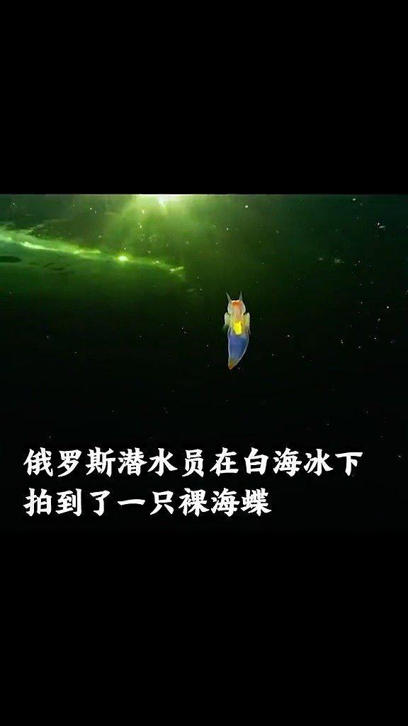 惊艳!俄潜水员白海冰下拍到裸海蝶。真的像是童话里的场景! ...