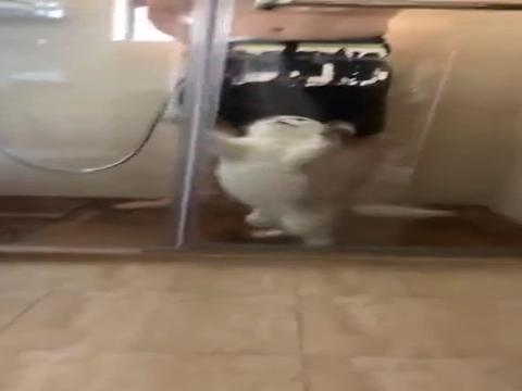 给猫咪洗澡,绝对是个苦差事!