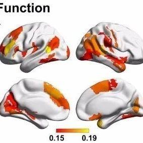 Cerebral Cortex: 张占军与舒妮团队发表认知老化相关最新研究进展